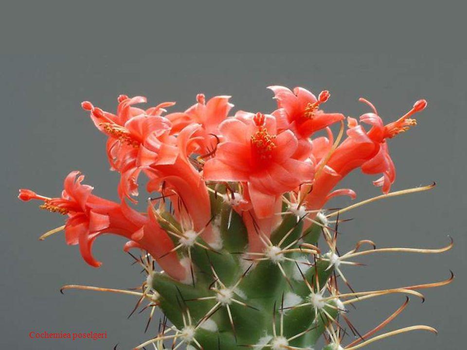 Jb leuba Juillet 2008 Les cactus – Jacques Dutronc