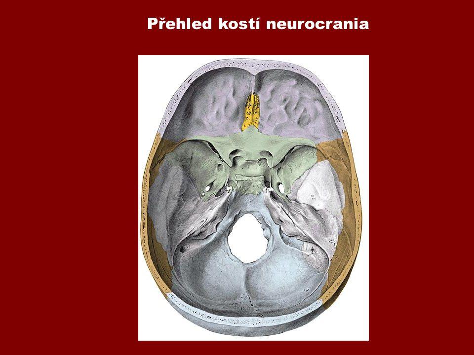 Přehled kostí neurocrania