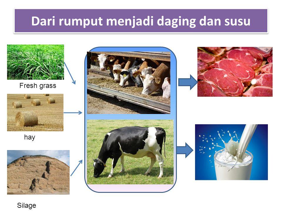 Dari rumput menjadi daging dan susu Silage hay Fresh grass