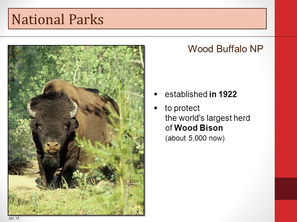 National Parks obr. 15 Wood Buffalo NP  established in 1922  to protect the world's largest herd of Wood Bison (about 5,000 now)