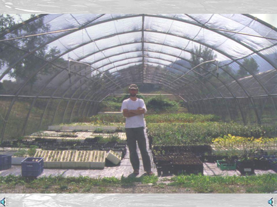 Piantina da seme (Seedling)