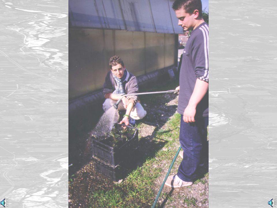 Preparati per le serre (Ready for the greenhouse)