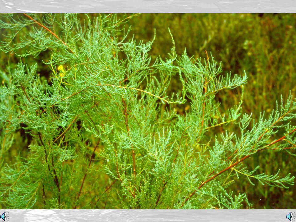 Conservazione della natura (Nature preservation) Vivaistica in situ (Nursery in situ) Le Azioni (The Actions)