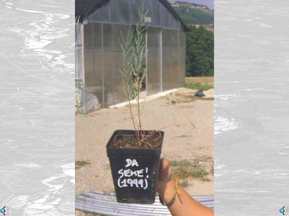 Lavoro in serra (Works in the greenhouse)