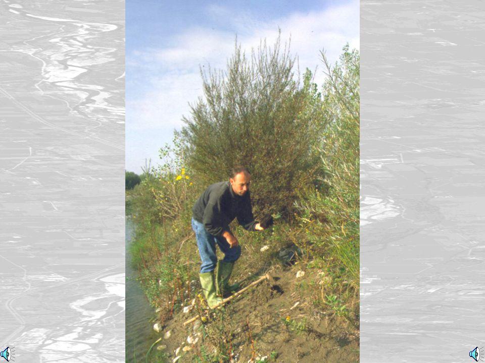 Piccoli arbusti da serra (Small bushes)
