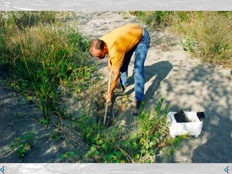 Preparazione terreno (Ground's preparation)