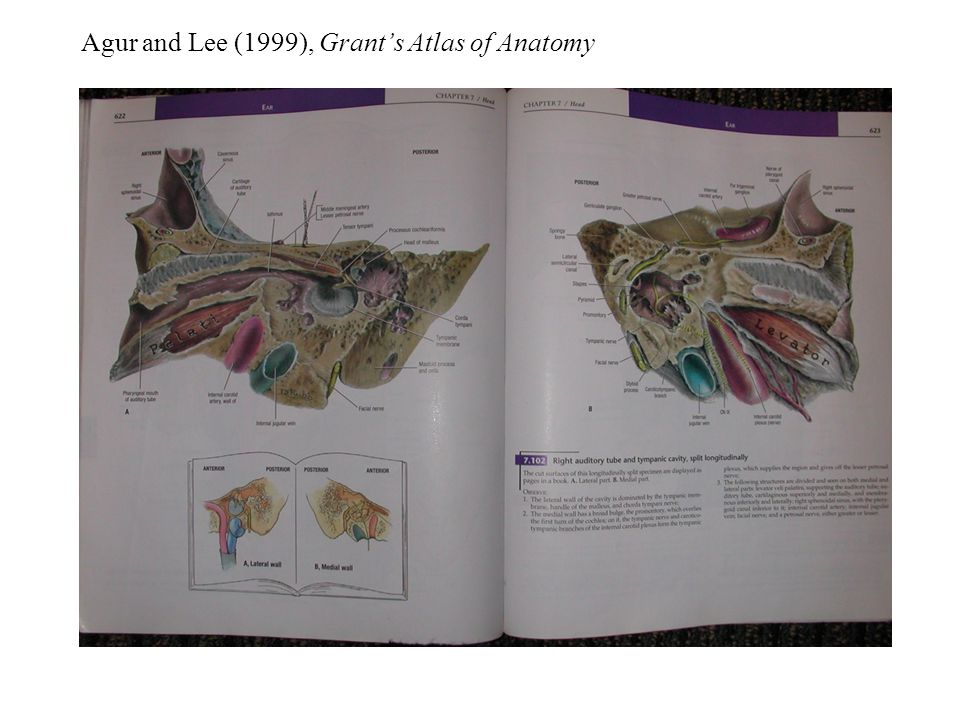Agur and Lee (1999), Grant's Atlas of Anatomy