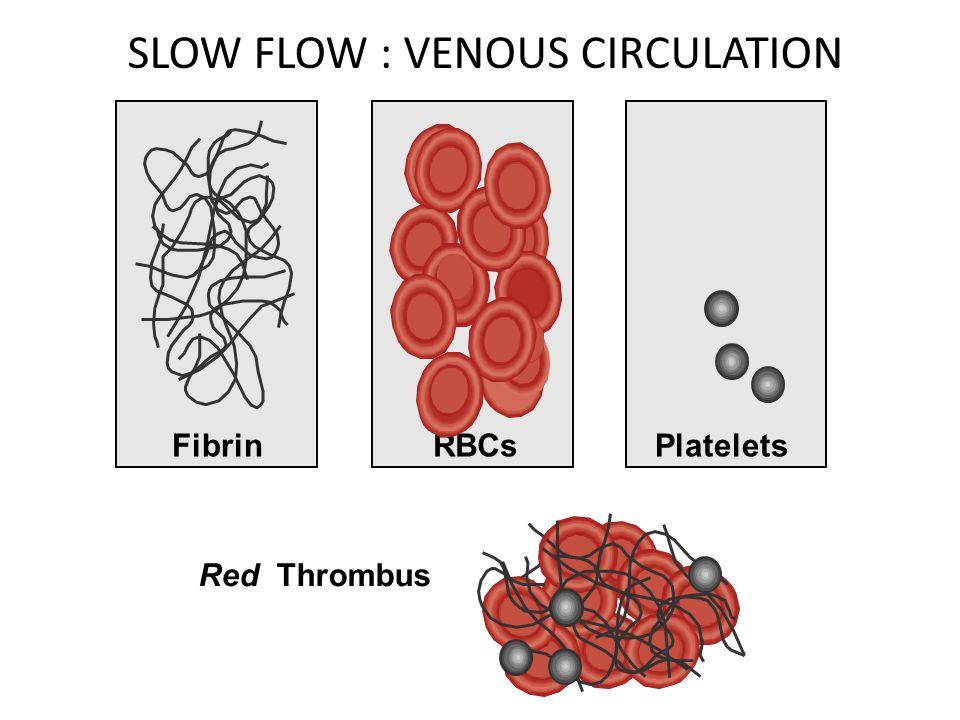 SLOW FLOW : VENOUS CIRCULATION