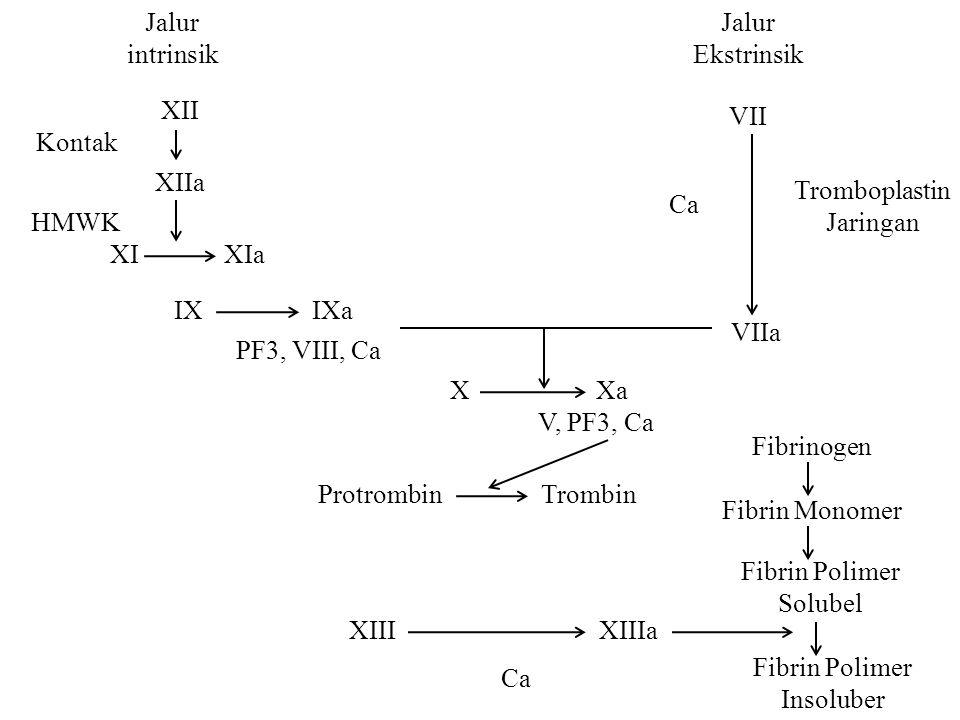 Jalur intrinsik IX XIaXI HMWK XIIa Kontak XII Xa Tromboplastin Jaringan X Ca VIIa VII Jalur Ekstrinsik PF3, VIII, Ca IXa TrombinProtrombin V, PF3, Ca Fibrin Polimer Solubel Fibrin Monomer Fibrinogen Fibrin Polimer Insoluber Ca XIIIaXIII