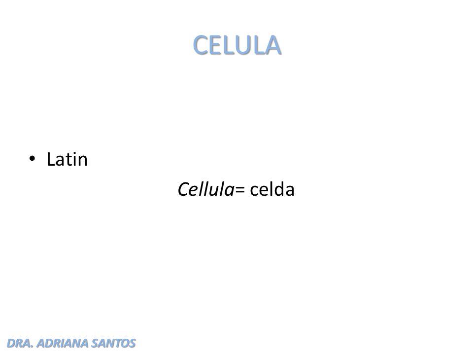 DRA. ADRIANA SANTOS CELULA Latin Cellula= celda