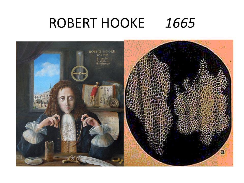 ROBERT HOOKE 1665