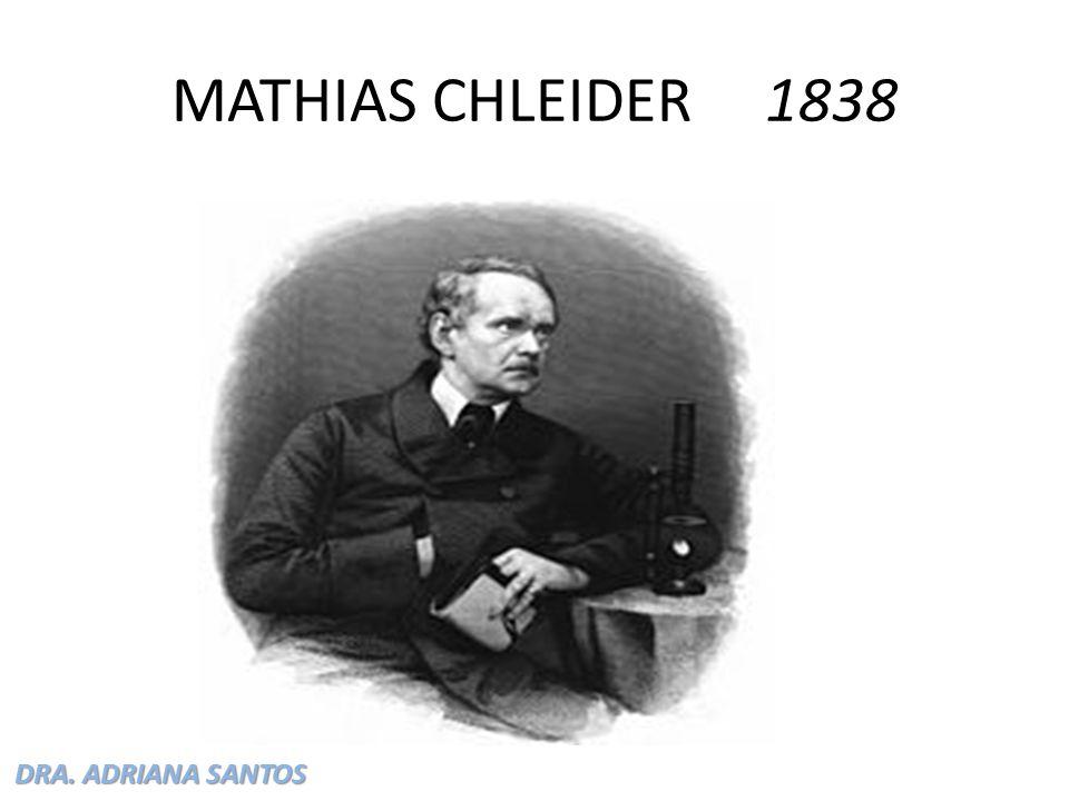 DRA. ADRIANA SANTOS MATHIAS CHLEIDER 1838
