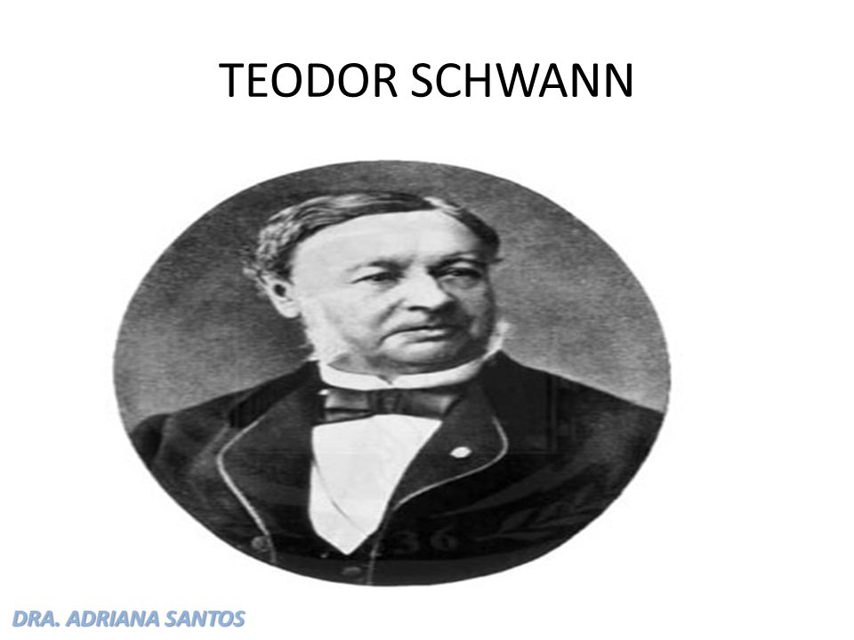 DRA. ADRIANA SANTOS TEODOR SCHWANN