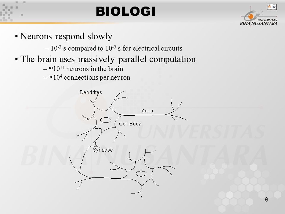 9 BIOLOGI Neurons respond slowly – 10 -3 s compared to 10 -9 s for electrical circuits The brain uses massively parallel computation –  10 11 neurons in the brain –  10 4 connections per neuron
