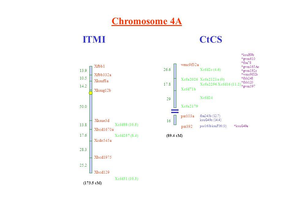 Chromosome 4A ITMICtCS wmc9f32a Xcfa2026 Xcfd71b Xcfa2179 psr103a psr392 26.6 17.8 29 16 Xcfd2c (4.6) Xcfa2121a (0) Xcfa2256 Xcfd16 (11.2) fba243b (12.7) ksuG49c (14.4) psr160b ksuF36 (0) (89.4 cM) *ksuH9b *gwm610 *fba78 *gwm165Ac *gwm192c *wmc9f32b *fbb248 *fbb120 *gwm397 *ksuG49a Xfbb1 13.9 Xfbb332a 10.5 Xksuf8a 14.2 Xksug12b 50.0 Xksue3d 13.8 Xbcd1670a 17.6 Xcdo545a 28.3 Xbcd1975 (173.5 cM) Xbcd129 25.2 Xcfd88 (10.5) Xcfd257 (8.4) Xcfd31 (10.3) Xcfd24