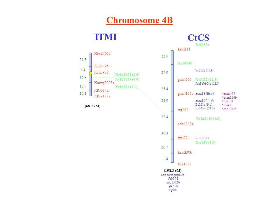 Chromosome 4B ITMI CtCS ksuH11 Xcfd54b gwm006 gwm192a wg282 cdo1312a ksuE2 ksuG30b fba177b 22.6 27.9 25.4 28.9 22.4 30.4 26.7 14 Xcfa2149 (4.8) bcd15a (15.9) Xcfd22 (12.3) fba1 fbb24b (21.1) gwm165Ba (0) gwm107 (4.6) E1M1c (9.1) E5M5m (21.5) ksuC2 (0) Xcfd39 (1.9) non cartographiés : fbb178 cdo1312b glk556 wg909 (198.3 cM) *gwm495 *gwm314b *fbb178 *fba41 *cdo1312c Xbcd402c 21.3 Xcdo795 7.2 Xcdo938 15.9 Xmwg2025a 13.7 Xfbb67d 10.1 Xfba177a (68.2 cM) Xcfa2091 (2.6) Xcfd283a (6.0) Xcfd39a (2.1) Xcfd59c