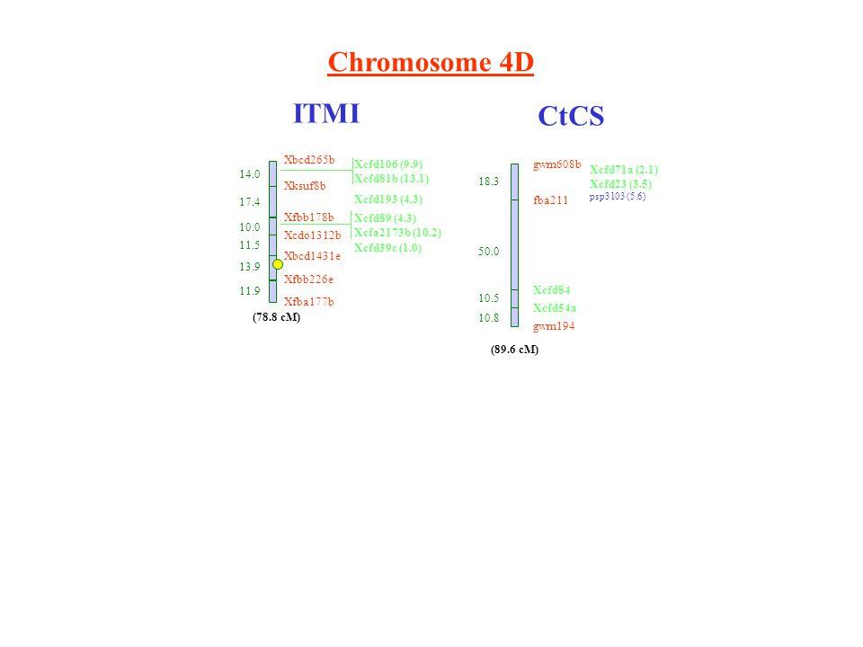 Chromosome 4D ITMI CtCS Xbcd265b 14.0 Xksuf8b 17.4 Xfbb178b 10.0 Xcdo1312b 11.5 Xbcd1431e 13.9 Xfbb226e 11.9 Xfba177b (78.8 cM) Xcfd106 (9.9) Xcfd81b (13.1) Xcfd193 (4.3) Xcfd89 (4.3) Xcfa2173b (10.2) Xcfd39c (1.0) gwm608b fba211 18.3 Xcfd71a (2.1) Xcfd23 (3.5) psp3103 (5.6) (89.6 cM) 50.0 10.5 10.8 Xcfd84 Xcfd54a gwm194