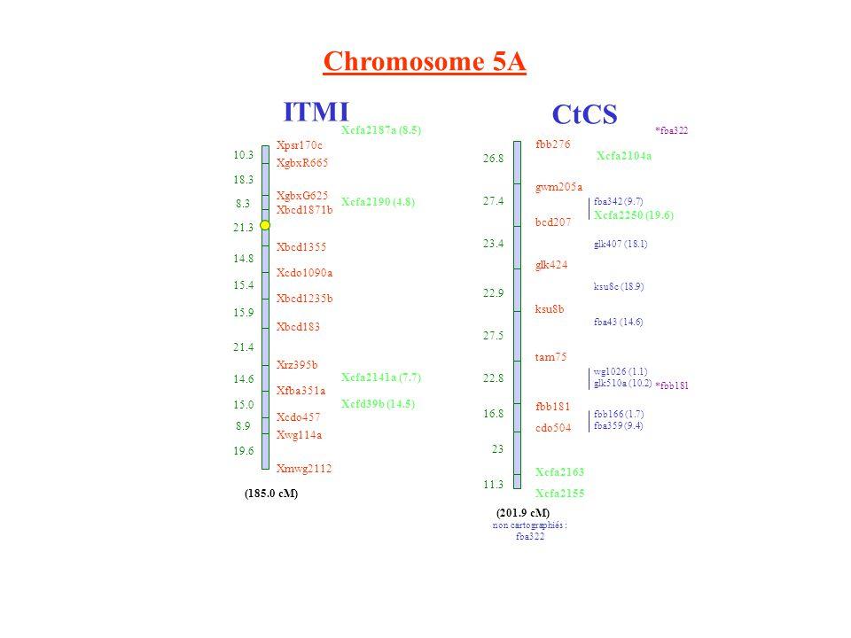 Chromosome 5A ITMI CtCS fbb276 gwm205a bcd207 glk424 ksu8b tam75 fbb181 cdo504 Xcfa2163 Xcfa2155 26.8 27.4 23.4 22.9 27.5 22.8 16.8 23 11.3 non cartographiés : fba322 fba342 (9.7) Xcfa2250 (19.6) glk407 (18.1) ksu8c (18.9) fba43 (14.6) wg1026 (1.1) glk510a (10.2) fbb166 (1.7) fba359 (9.4) (201.9 cM) *fba322 *fbb181 Xbcd1871b 21.3 Xbcd1355 14.8 Xcdo1090a 15.4 Xbcd1235b 15.9 Xbcd183 21.4 Xrz395b 14.6 Xfba351a 15.0 Xcdo457 8.9 Xwg114a 19.6 Xmwg2112 (185.0 cM) XgbxG625 XgbxR665 Xpsr170c 10.3 18.3 8.3 Xcfa2187a (8.5) Xcfa2190 (4.8) Xcfa2141a (7.7) Xcfd39b (14.5) Xcfa2104a