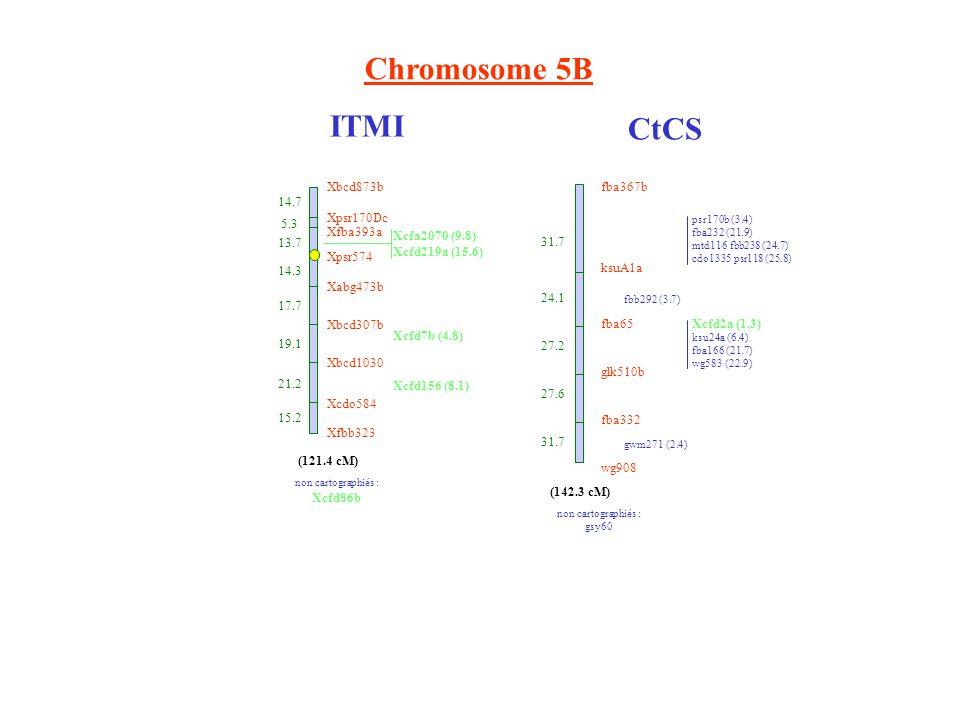 Chromosome 5B ITMI CtCS wg908 fba332 glk510b fba65 ksuA1a fba367b 31.7 24.1 27.2 27.6 31.7 psr170b (3.4) fba232 (21.9) mtd116 fbb238 (24.7) cdo1335 psr118 (25.8) fbb292 (3.7) Xcfd2a (1.3) ksu24a (6.4) fba166 (21.7) wg583 (22.9) gwm271 (2.4) non cartographiés : gsy60 (142.3 cM) Xbcd873b 14.3 17.7 Xbcd307b 19.1 Xbcd1030 21.2 Xcdo584 15.2 Xfbb323 (121.4 cM) Xabg473b Xpsr574 13.7 Xfba393a 5.3 Xpsr170Dc 14.7 Xcfa2070 (9.8) Xcfd219a (15.6) Xcfd7b (4.8) Xcfd156 (8.1) non cartographiés : Xcfd86b