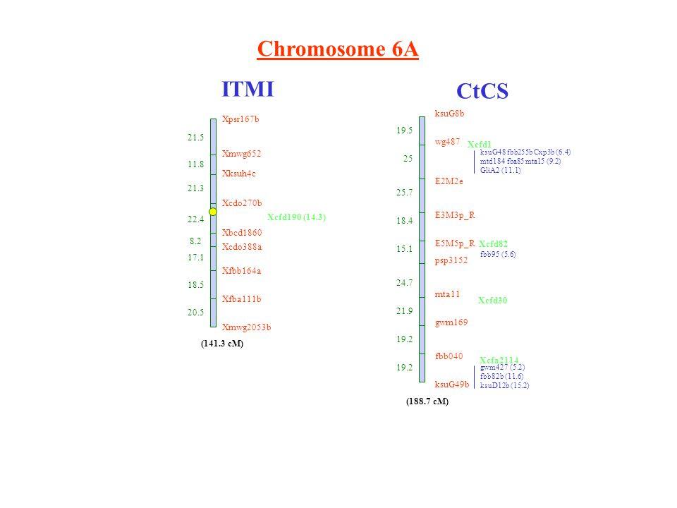 Chromosome 6A ITMI CtCS ksuG8b wg487 E2M2e E3M3p_R E5M5p_R psp3152 mta11 gwm169 fbb040 ksuG49b 19.5 25 25.7 18.4 15.1 24.7 21.9 19.2 ksuG48 fbb255b Cxp3b (6.4) mtd184 fba85 mta15 (9.2) GliA2 (11.1) fbb95 (5.6) gwm427 (5.2) fbb82b (11.6) ksuD12b (15.2) Xcfa2114 (188.7 cM) Xpsr167b 21.5 Xmwg652 11.8 Xksuh4c 21.3 Xcdo270b 22.4 Xbcd1860 8.2 Xcdo388a 17.1 Xfbb164a 18.5 Xfba111b 20.5 Xmwg2053b (141.3 cM) Xcfd190 (14.3) Xcfd1 Xcfd82 Xcfd30
