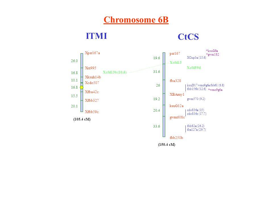 Chromosome 6B ITMI CtCS Xpsr167a 26.0 Xrz995 16.8 Xksuh14b 10.1 Xcdo507 16.8 Xfba42c 15.5 Xfbb327 20.1 Xfbb59c (105.4 cM) Xcfd13b (10.6) psr167 Xcfd13 fba328 XBAmy1 ksuG12a gwm608c fbb250b 19.6 31.6 26 19.2 20.4 33.6 XCxp3a (15.6) ksuD17 wmc9g6a fbb61 (6.8) fbb156b (12.6) gwm570 (9.2) cdo836a (15) cdo836c (17.7) fbb82a (26.2) fba127a (29.7) (150.4 cM) *ksuG8a *gwm182 *wmc9g6a Xcfd59d