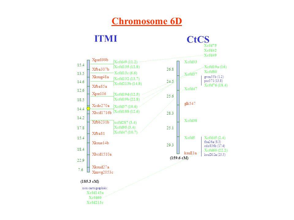 Chromosome 6D ITMI CtCS Xcfd33 Xcfd37 Xcfd47 glk547 Xcfd38 Xcfd5 ksuE3a 26.8 24.5 25.6 28.3 25.1 29.3 Xcfd19a (16) Xcfd80 gwm55b (1.2) psr371 (13.8) Xcfd76 (18.4) Xcfd45 (2.4) fba26a (8.3) cdo836b (17.4) Xcfd60 (22.2) ksuD12a (23.5) (159.6 cM) Xpsr899b 15.4 Xfba307b 13.5 Xksug48a 14.6 Xfba85a 12.6 Xpsr106 18.5 Xcdo270a 14.4 Xbcd1716b 14.2 Xfbb231b 17.8 Xfba81 15.4 Xksue14b 18.4 Xbcd1510a 22.9 Xksud27a 7.6 Xmwg2053c (185.3 cM) Xcfd49 (11.2) Xcfd135 (12.8) Xcfd13c (6.6) Xcfd132 (13.7) Xcfd213b (14.8) Xcfd19d (12.5) Xcfd19b (22.8) Xcfd37 (10.6) Xcfd188 (12.6) xcfd287 (3.4) Xcfd95 (3.4) Xcfd47 (10.7) non cartographiés : Xcfd143a Xcfd60 Xcfd213c Xcfd75 Xcfd42 Xcfd49