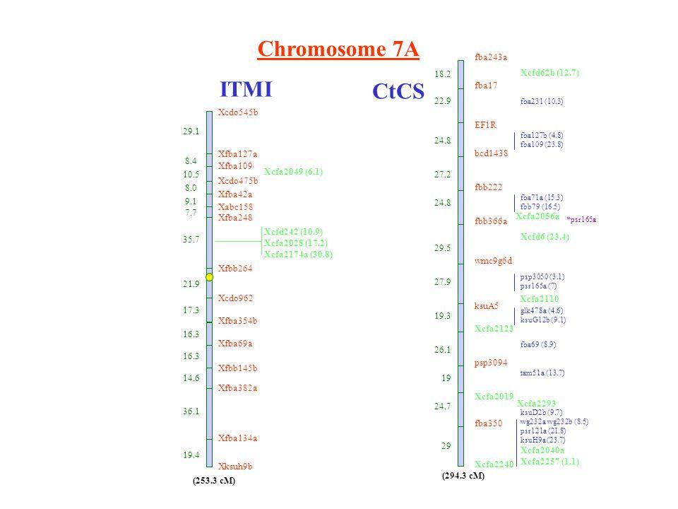 Chromosome 7A ITMI CtCS fba243a fba17 EF1R bcd1438 fbb222 fbb366a wmc9g6d ksuA5 Xcfa2123 psp3094 Xcfa2019 fba350 Xcfa2240 18.2 22.9 24.8 27.2 24.8 29.5 27.9 19.3 26.1 19 24.7 29 Xcfd62b (12.7) fba231 (10.3) fba127b (4.8) fba109 (23.8) fba71a (15.3) fbb79 (16.5) Xcfd6 (23.4) psp3050 (3.1) psr165a (7) glk478a (4.6) ksuG12b (9.1) fba69 (8.9) tam51a (13.7) ksuD2b (9.7) wg232a wg232b (8.5) psr121a (21.8) ksuH9a (23.7) Xcfa2040a Xcfa2257 (1.1) (294.3 cM) *psr165a Xcdo545b Xfba127a 8.4 Xfba109 10.5 Xcdo475b 8.0 Xfba42a 9.1 Xabc158 7.7 Xfba248 35.7 Xfbb264 21.9 Xcdo962 17.3 Xfba354b 16.3 Xfba69a 16.3 Xfbb145b 14.6 Xfba382a 36.1 Xfba134a 19.4 Xksuh9b 29.1 (253.3 cM) Xcfa2049 (6.1) Xcfd242 (10.9) Xcfa2028 (17.2) Xcfa2174a (30.8) Xcfa2056a Xcfa2110 Xcfa2293