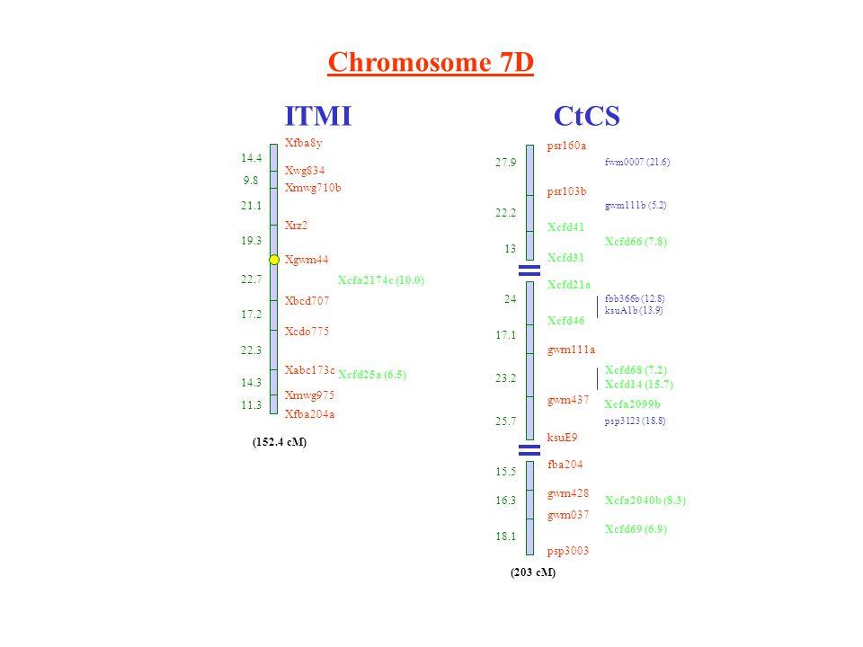 Chromosome 7D ITMICtCS Xfba8y 14.4 Xwg834 9.8 Xmwg710b 21.1 Xbcd707 17.2 Xcdo775 22.3 Xabc173c 14.3 Xmwg975 11.3 Xfba204a (152.4 cM) 19.3 Xrz2 Xgwm44 22.7 Xcfa2174c (10.0) Xcfd25a (6.5) psr103b Xcfd41 Xcfd31 Xcfd21a Xcfd46 gwm111a gwm437 ksuE9 fba204 gwm428 gwm037 psp3003 27.9 22.2 13 24 17.1 23.2 25.7 15.5 16.3 18.1 fwm0007 (21.6) gwm111b (5.2) Xcfd66 (7.8) fbb366b (12.8) ksuA1b (13.9) Xcfd68 (7.2) Xcfd14 (15.7) psp3123 (18.8) Xcfa2040b (8.3) Xcfd69 (6.9) (203 cM) psr160a Xcfa2099b
