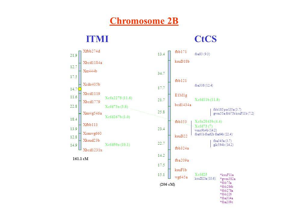 Chromosome 2B ITMICtCS Xfbb274d 21.9 Xbcd1184a 12.7 Xrz444b 17.5 Xcdo405b 14.7 Xbcd1119 11.6 Xbcd1779 22.8 Xmwg546a 18.4 Xfbb113 13.9 Xcmwg660 12.8 Xksud23b 14.9 Xbcd1231x 161.1 cM Xcfa2278 (11.6) Xcfd73a (3.8) Xcfd267b (1.0) Xcfd50a (10.1) fbb171 ksuD18b fbb121 E1M1g bcd1434a fbb353 ksuD22 fbb324a fba209a ksuF1b wg645a 13.4 34.7 17.7 21.7 25.8 23.4 22.7 14.2 17.5 15.1 fba83 (9.3) fba308 (12.4) Xcfd11b (11.8) fbb185 psr135a (3.7) gwm55a fbb75b ksuF11b (7.2) Xcfa2043b (4.4) Xcfd73 (7) wmc9b4b (14.2) fba61b fba62b fba64b (22.4) fba345a (3.7) glk594b (14.2) Xcfd25 ksuD23a (10.6) (206 cM) *ksuF11a *gwm382a *fbb75a *fbb284b *fbb278a *fbb226 *fba314a *fba209c
