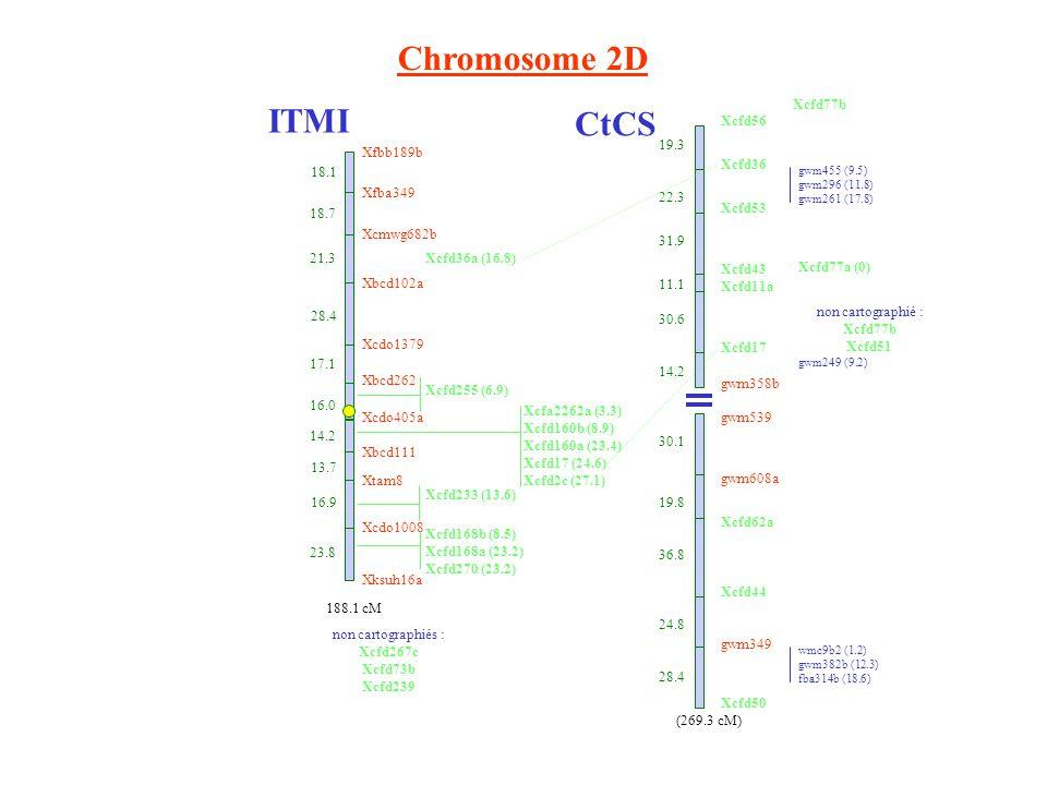 Chromosome 2D ITMI CtCS Xcfd56 Xcfd36 Xcfd53 Xcfd43 Xcfd11a Xcfd17 gwm358b gwm539 gwm608a Xcfd62a Xcfd44 gwm349 Xcfd50 19.3 22.3 31.9 11.1 30.6 14.2 30.1 19.8 36.8 24.8 28.4 gwm455 (9.5) gwm296 (11.8) gwm261 (17.8) Xcfd77a (0) wmc9b2 (1.2) gwm382b (12.3) fba314b (18.6) Xcfd77b (269.3 cM) gwm249 (9.2) Xfbb189b 18.1 Xfba349 18.7 21.3 Xbcd102a 28.4 Xcdo1379 17.1 Xbcd262 16.0 Xcdo405a 14.2 Xbcd111 13.7 Xtam8 16.9 Xcdo1008 23.8 Xksuh16a Xcmwg682b 188.1 cM Xcfd36a (16.8) Xcfd255 (6.9) Xcfa2262a (3.3) Xcfd160b (8.9) Xcfd160a (23.4) Xcfd17 (24.6) Xcfd2c (27.1) Xcfd233 (13.6) Xcfd168b (8.5) Xcfd168a (23.2) Xcfd270 (23.2) non cartographiés : Xcfd267c Xcfd73b Xcfd239 non cartographié : Xcfd77b Xcfd51