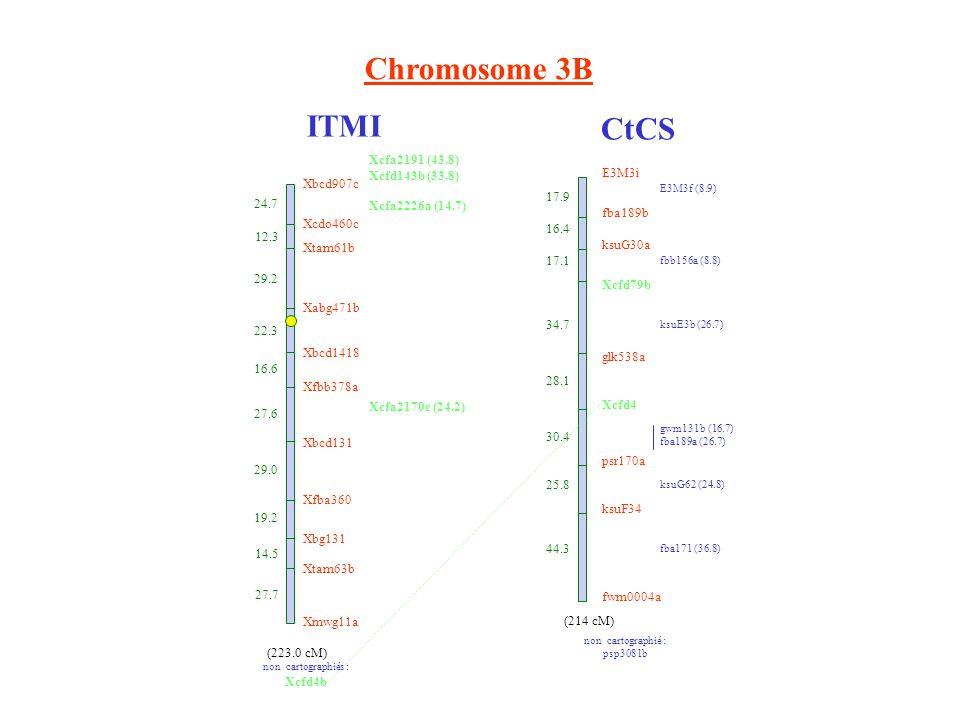 Chromosome 3B ITMI CtCS E3M3i fba189b ksuG30a Xcfd79b glk538a Xcfd4 psr170a ksuF34 fwm0004a 17.9 16.4 17.1 34.7 28.1 30.4 25.8 44.3 E3M3f (8.9) fbb156a (8.8) ksuE3b (26.7) gwm131b (16.7) fba189a (26.7) ksuG62 (24.8) fba171 (36.8) non cartographié : psp3081b (214 cM) Xbcd907c 24.7 Xcdo460c 12.3 Xtam61b 29.2 Xabg471b 22.3 Xbcd1418 16.6 Xfbb378a 27.6 Xbcd131 29.0 Xfba360 19.2 Xbg131 14.5 Xtam63b 27.7 Xmwg11a (223.0 cM) Xcfa2191 (43.8) Xcfd143b (33.8) Xcfa2226a (14.7) Xcfa2170c (24.2) non cartographiés : Xcfd4b