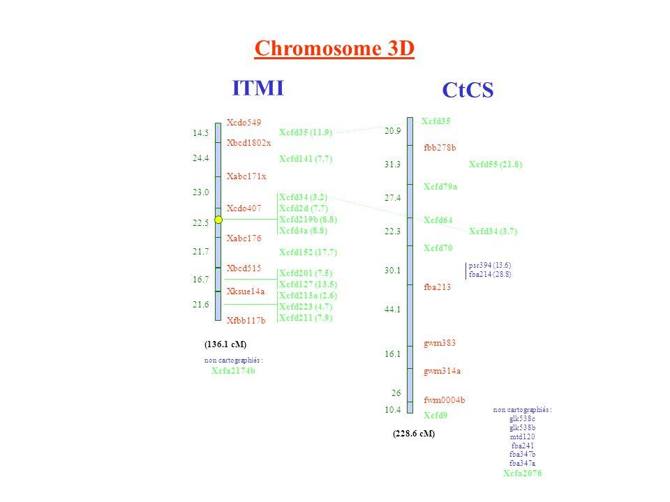 Chromosome 3D ITMI CtCS Xcfd35 fbb278b Xcfd79a Xcfd64 Xcfd70 fba213 gwm383 gwm314a fwm0004b Xcfd9 20.9 31.3 27.4 22.3 30.1 44.1 16.1 26 10.4 Xcfd55 (21.8) Xcfd34 (3.7) psr394 (13.6) fba214 (28.8) non cartographiés : glk538c glk538b mtd120 fba241 fba347b fba347a Xcfa2076 (228.6 cM) Xcdo549 14.5 Xbcd1802x 24.4 Xabc171x 23.0 Xcdo407 22.5 Xabc176 21.7 Xbcd515 16.7 Xksue14a 21.6 Xfbb117b (136.1 cM) Xcfd35 (11.9) Xcfd141 (7.7) Xcfd34 (3.2) Xcfd2d (7.7) Xcfd219b (8.8) Xcfd4a (8.8) Xcfd152 (17.7) Xcfd201 (7.5) Xcfd127 (13.5) Xcfd213a (2.6) Xcfd223 (4.7) Xcfd211 (7.9) non cartographiés : Xcfa2174b