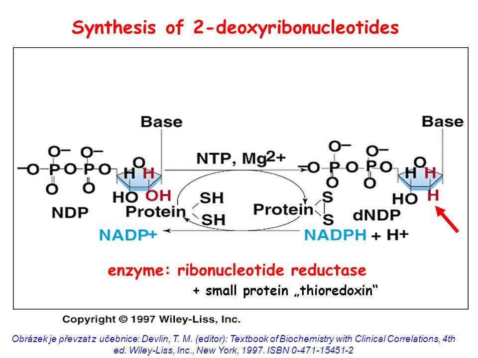 """enzyme: ribonucleotide reductase + small protein """"thioredoxin Obrázek je převzat z učebnice: Devlin, T."""