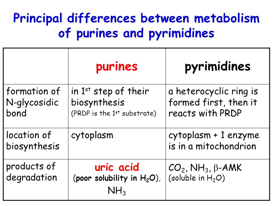 Principal differences between metabolism of purines and pyrimidines purinespyrimidines formation of N-glycosidic bond in 1 st step of their biosynthes