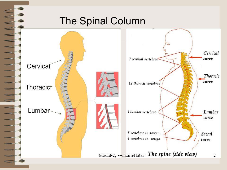 Cervical Thoracic Lumbar The Spinal Column Modul-2, ---m.arief latar2