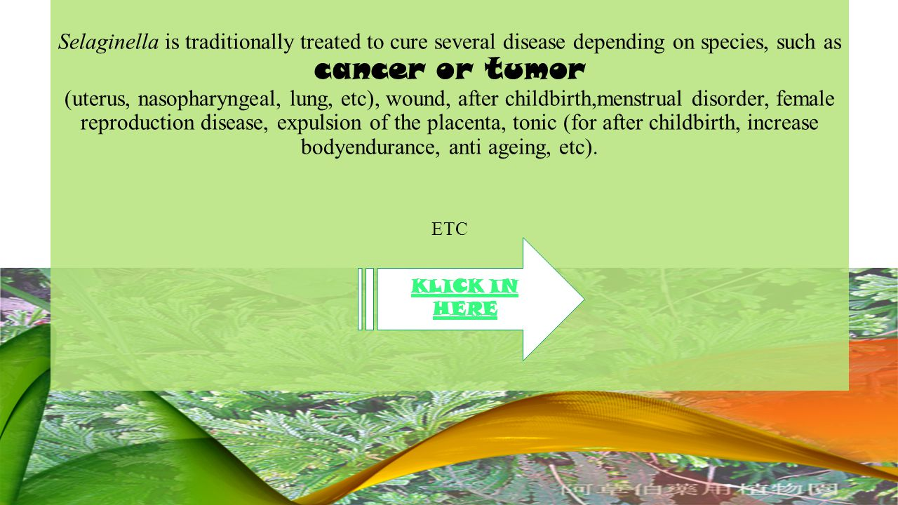 Selaginella is traditionally treated to cure several disease depending on species, such as cancer or tumor (uterus, nasopharyngeal, lung, etc), wound, after childbirth,menstrual disorder, female reproduction disease, expulsion of the placenta, tonic (for after childbirth, increase bodyendurance, anti ageing, etc).