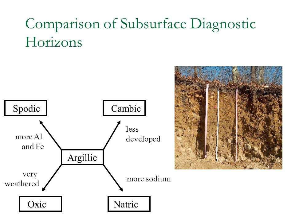 Comparison of Subsurface Diagnostic Horizons Oxic very weathered SpodicCambic Argillic Natric more Al and Fe less developed more sodium