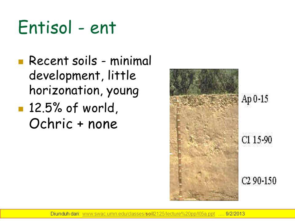 Entisol - ent Recent soils - minimal development, little horizonation, young soils. 12.5% of world, Ochric + none Diunduh dari: www.swac.umn.edu/class
