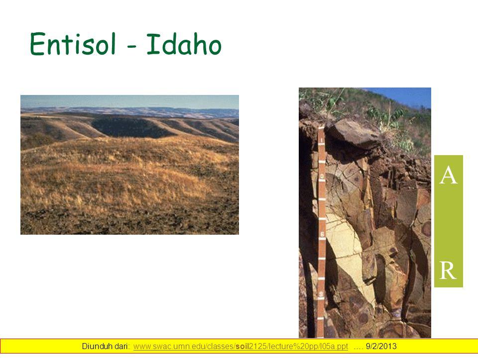Entisol - Idaho ARAR Diunduh dari: www.swac.umn.edu/classes/soil2125/lecture%20pp/l05a.ppt …. 9/2/2013www.swac.umn.edu/classes/soil2125/lecture%20pp/l