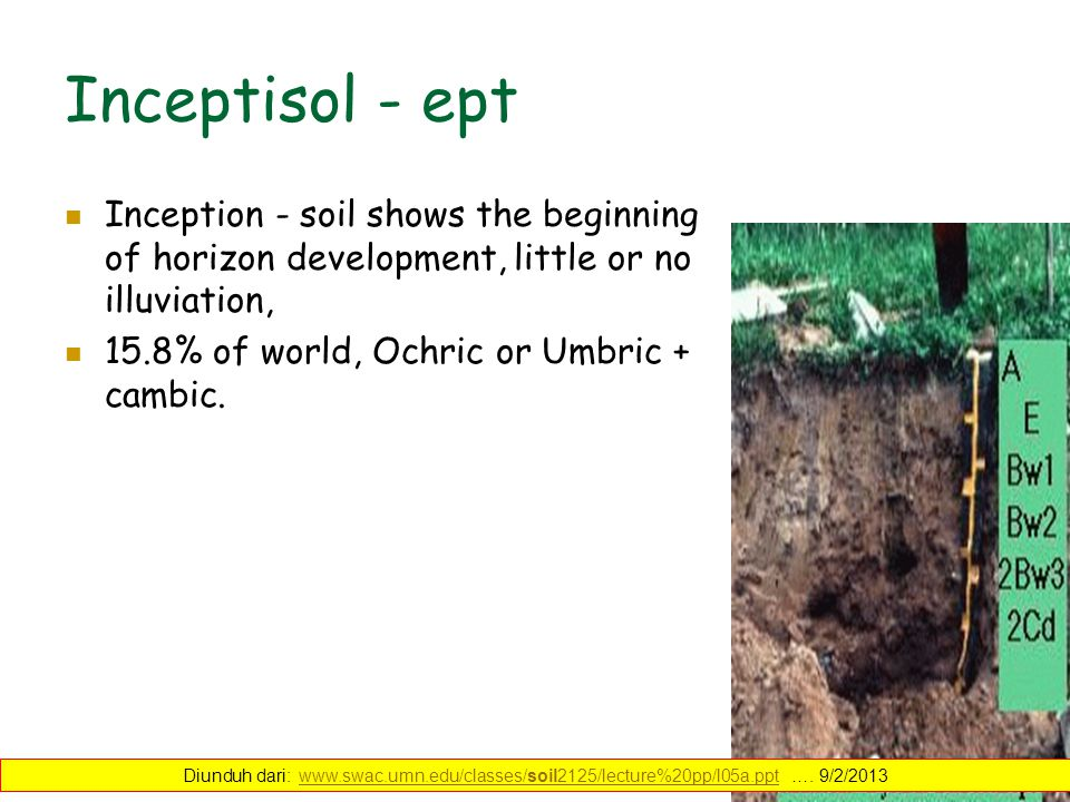 Inceptisol - ept Inception - soil shows the beginning of horizon development, little or no illuviation, 15.8% of world, Ochric or Umbric + cambic. Diu