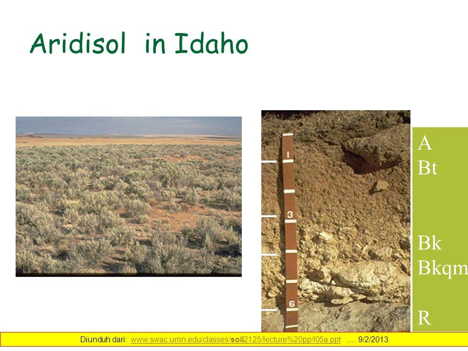 Aridisol in Idaho A Bt Bk Bkqm R Diunduh dari: www.swac.umn.edu/classes/soil2125/lecture%20pp/l05a.ppt …. 9/2/2013www.swac.umn.edu/classes/soil2125/le