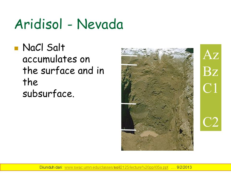 Aridisol - Nevada Az Bz C1 C2 NaCl Salt accumulates on the surface and in the subsurface. Diunduh dari: www.swac.umn.edu/classes/soil2125/lecture%20pp