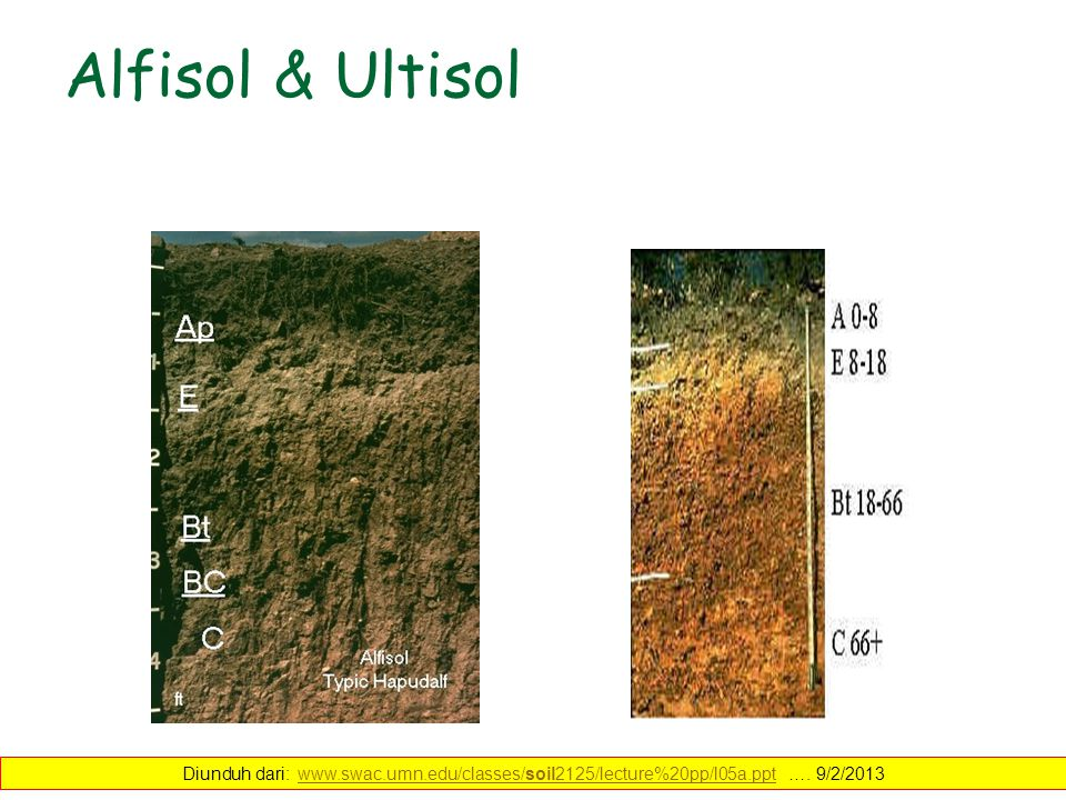 Alfisol & Ultisol Diunduh dari: www.swac.umn.edu/classes/soil2125/lecture%20pp/l05a.ppt …. 9/2/2013www.swac.umn.edu/classes/soil2125/lecture%20pp/l05a