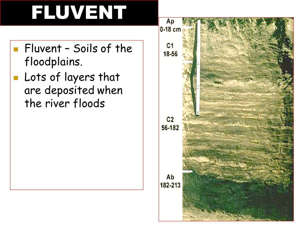 Fluvent – Soils of the floodplains. Lots of layers that are deposited when the river floods FLUVENT