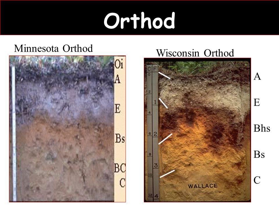 Orthod Wisconsin Orthod A E Bhs Bs C Minnesota Orthod