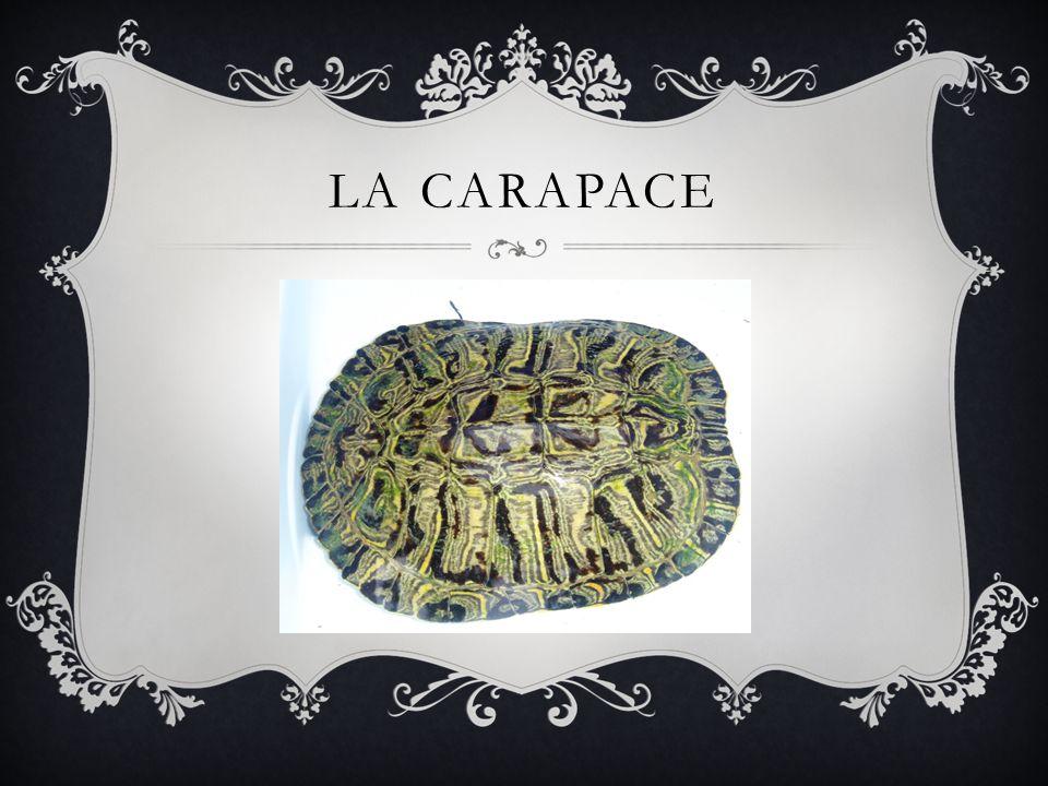 LA CARAPACE