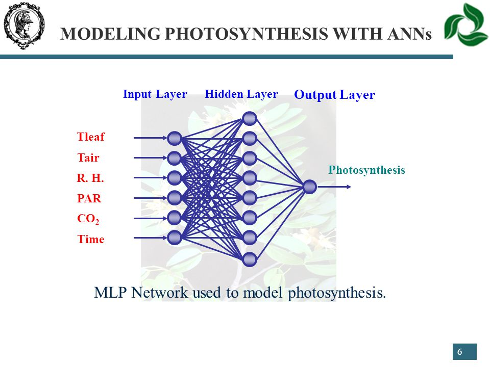 6 MLP Network used to model photosynthesis.