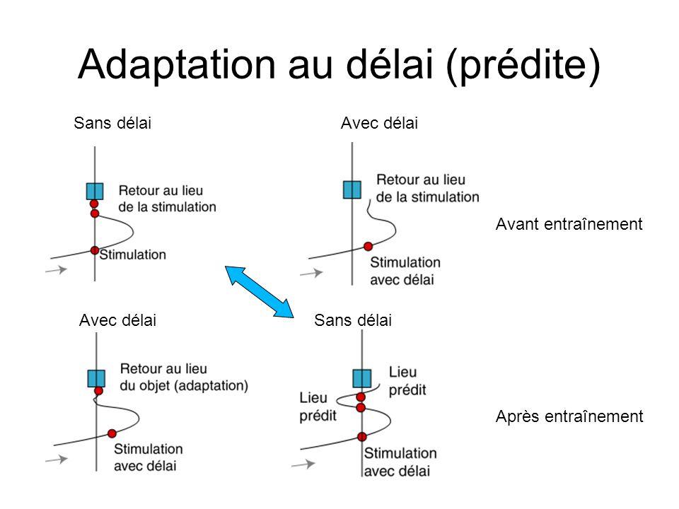 Adaptation au délai (prédite) Avant entraînement Après entraînement Avec délai Sans délai Avec délai