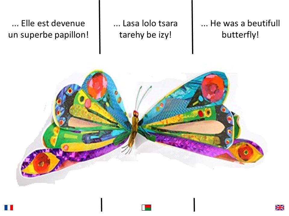 ... Elle est devenue un superbe papillon!... Lasa lolo tsara tarehy be izy!...