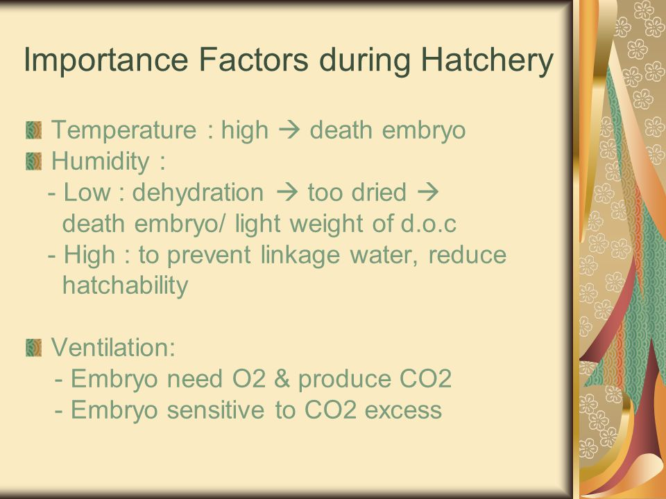 Importance Factors during Hatchery Temperature : high  death embryo Humidity : - Low : dehydration  too dried  death embryo/ light weight of d.o.c